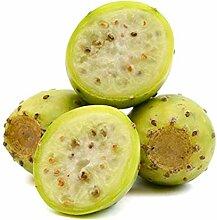 Portal Cool 5 Samen Weiße Frucht Feigenkaktus,