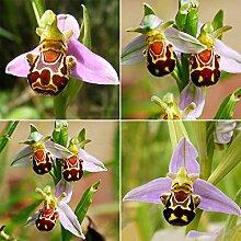 Portal Cool 50Pcs Rare nsamen Lächeln Gesicht Bee