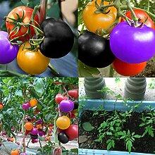 Portal Cool 7E44 100Pcs Regenbogen Tomatensamen