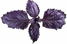 Portal Cool 95 mg Purple Ruffles Sweet Basil 50+
