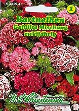 Portal Cool Bartnelken, Gemischt, Samen,