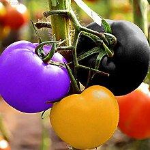 Portal Cool Eefe 100Pcs Regenbogen Tomatensamen