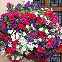 Portal Cool Fairy Blumen-Samen-Petunie Hybrida