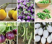 Portal Cool Lang Grün: Aubergine-Samen-Solanum