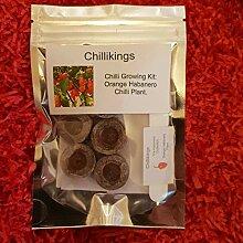 Portal Cool Orange Habanero Chili, Chili-Growkit!