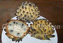 Portal Cool Rollinia Deliciosa Exotic Fruit 6