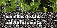 Portal Cool Samen Chia Salvia hispanica 100 Samen