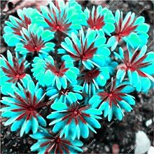 Portal Cool Samen Paket: Mehrfarbiges: 100 Pcsx2