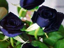 Portal Cool Seltene heiße schwar Rose, n,