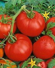 Portal Cool Tomato Bonny besten 500 Tomato Samen