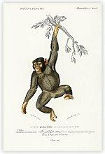 Poster Chimpanzee von Charles D' Orbigny Big