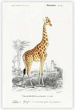 Poster Giraffe von Charles d' Orbigny Big Box