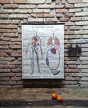 Poster mit Blutkreislauf, 1960er