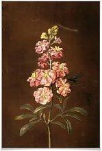 Poster - Poster Dietzsch - Eine rosa Garten Levkkoje