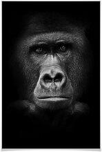 Poster - Poster Gorilla