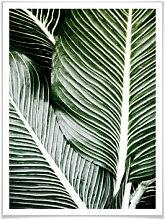 Poster - Poster Palmenblätter