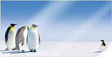 Poster - Poster Penguin