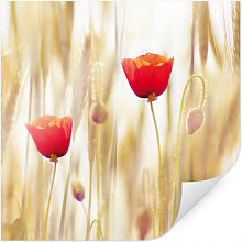 Poster - Poster Poppies