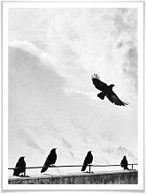 Poster - Poster Vogelfrei