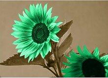 Poster Sunflower, Grafikdruck in Braun East Urban