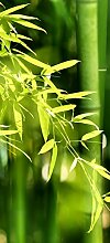 posterdepot Türtapete Türposter Bambuswald mit Bambuspflanzen - Größe 93 x 205 cm, 1 Stück, grün, ktt0568