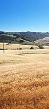 posterdepot Türtapete Türposter Felder und Hügel in der Toskana - Italien - Größe 93 x 205 cm, 1 Stück, ktt0683