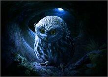 Posterlounge Acrylglasbild 80 x 60 cm: Little owl