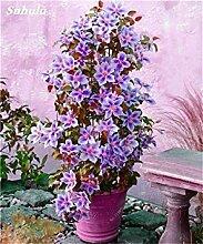 Potseed 100 Stück Clematis Pflanzensamen Schöne