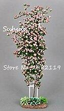 Potseed 100 Stück Rare Kletterrose Blumensamen