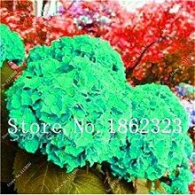 Potseed . 100Pcs Mehrere Farbwahl Hydrangea