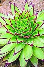 Potseed 100pcs Mixed Aloe Samen Exotische Stauden