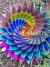 Potseed 20 Stück Regenbogen Aloe Mixed