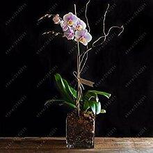 Potseed 50 Stück Mini Orchideensamen Mini Flower