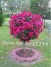 Potseed 50 Stück Selten schöne romantische rosa