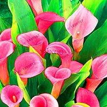 Potseed Blumen-Garten 10 Stück STK/Packung