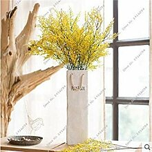Potseed Exotische Valentinstag Grass Seed Heirloom