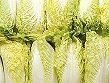 Potseed Garten Chinakohl Samen Gemüse, 10g /