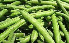 Potseed Keim Seeds: 100+ Samen: Grüne