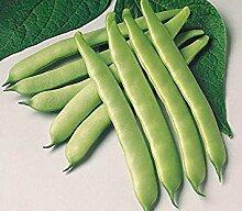Potseed Keimfutter: 250+ Seeds: Grüne