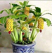 Potseed Keimfutter: 300 Samen von 100Dwarf Banane