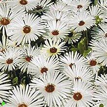 Potseed Keimfutter: B 10000 Seeds: Outsidepride