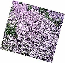 Potseed Keimfutter: Creeping Thyme Seeds Herb
