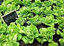 Potseed Salatsamen Billig, Garten Salat, Easy