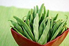 Potseed Samen Keimung: 100+ Samen: Grüne