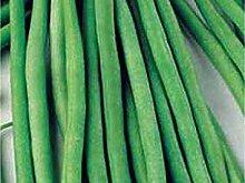 Potseed Samen Keimung: 250+ Seeds: Grüne