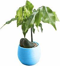 PPLAX Mini Bunte Runde Kunststoff Pflanze