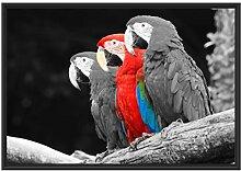 prächtige Papageien auf AST im Schattenfugen