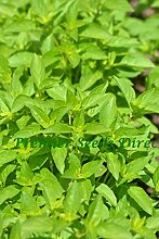Premier Seeds Direct HRB06 Kraut LimonenbasilikumSamen (Packung mit 1000)