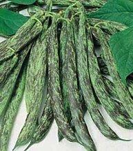 Premier Seeds Direct seltene winzige italienische