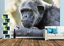 Premium Foto-Tapete Alter Schimpanse (verschiedene